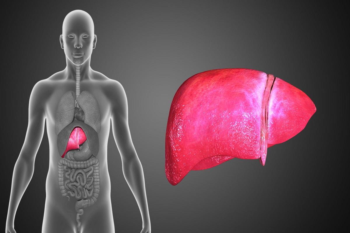 How To Fix A Fatty Liver