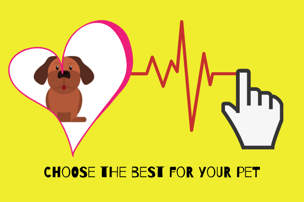 07 Best Tips For First Time Pet Owners