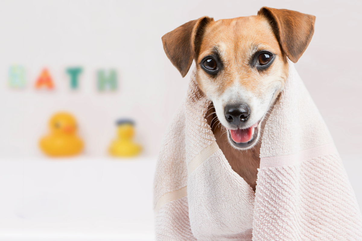 07 Best Tips To Keep House Clean With Pets