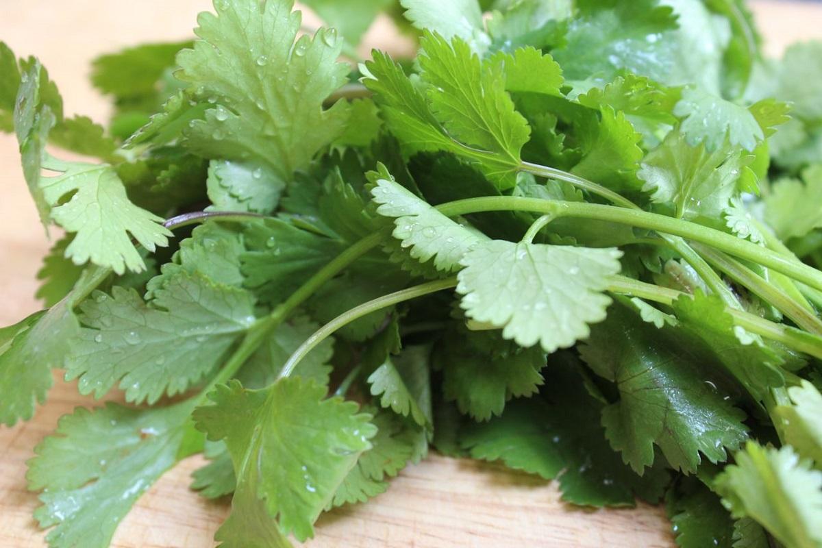 Add greens to your diet - Coriander