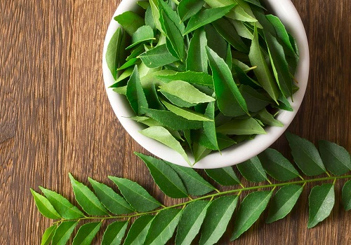 6 Great Health Benefits Of Curry Leaves
