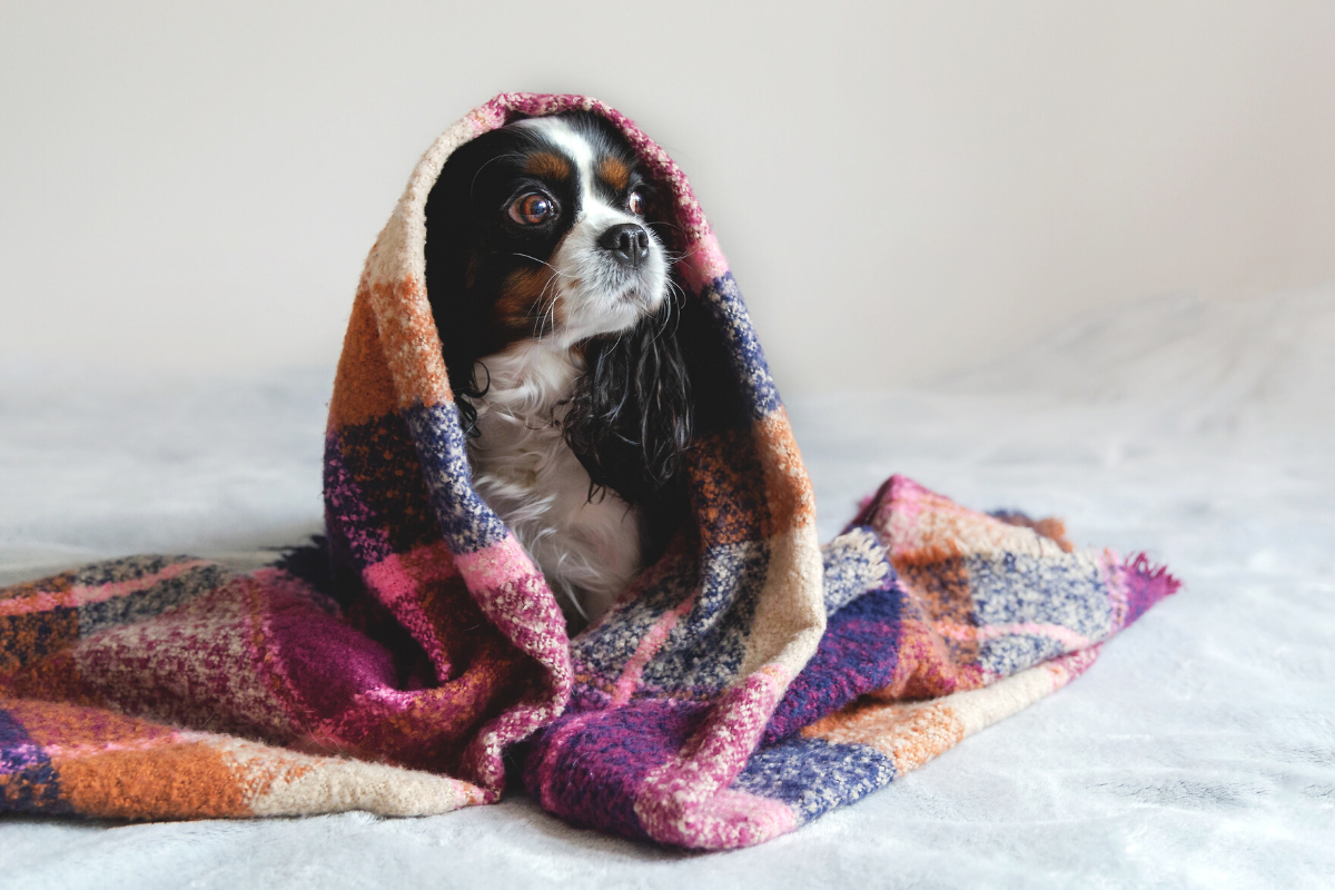 Socializing Your Dog- 7 Reasons Why It Is Necessary