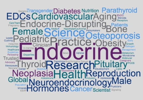 Role Of The Endocrine System In Erectile Function